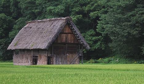 田んぼと家